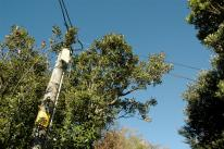 tree too close to overhead wires
