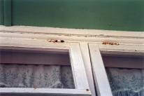 141 rusted hinge