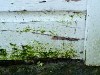 rot in bottom weatherboard